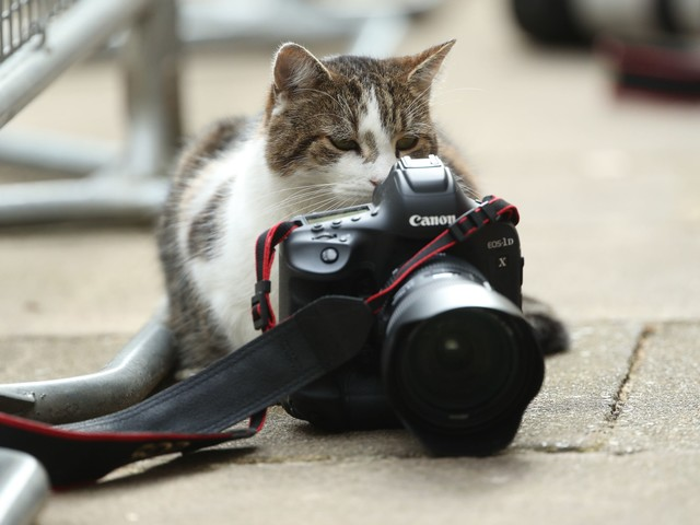 The life and times of Larry the Downing Street cat