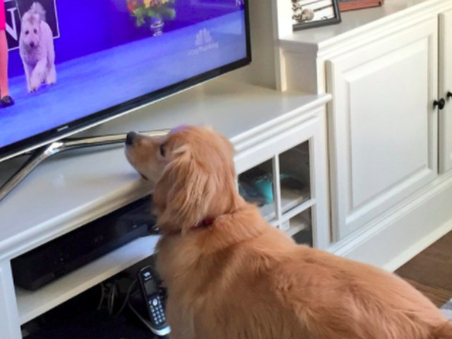 Family getting you down? Check out these dogs watching the National Dog Show.