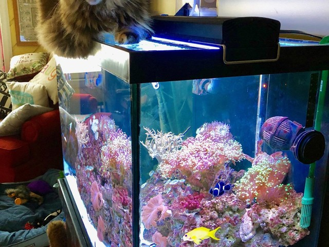 Cats and Their Aquarium