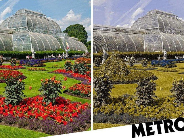Photos show how colour blind people see the world