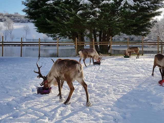 Families demand refunds from Reindeer Lodge Christmas event amid tier rules