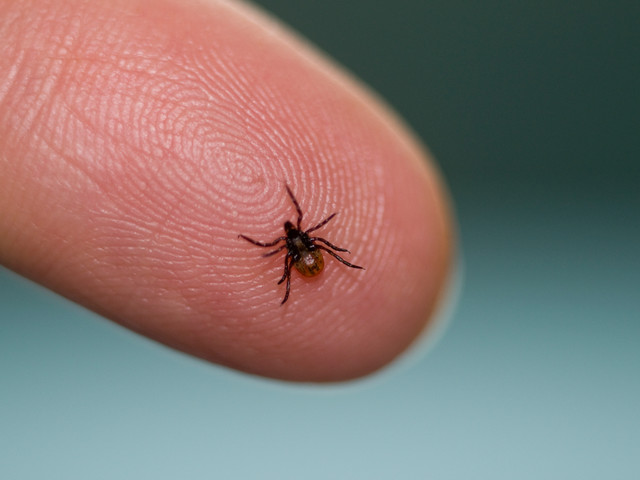 UK warning after extremely rare tick bite infection that can cause PARALYSIS leaves patient in hospital
