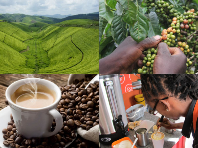 Africa: Now, 15 Species of Coffee Face Extinction in East Africa
