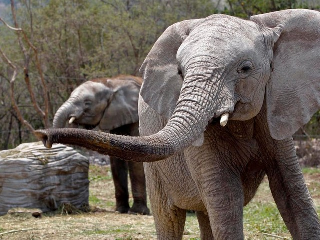 The infamous 'VIX Elephant' trader just returned to harvest the gains he made when stocks went haywire