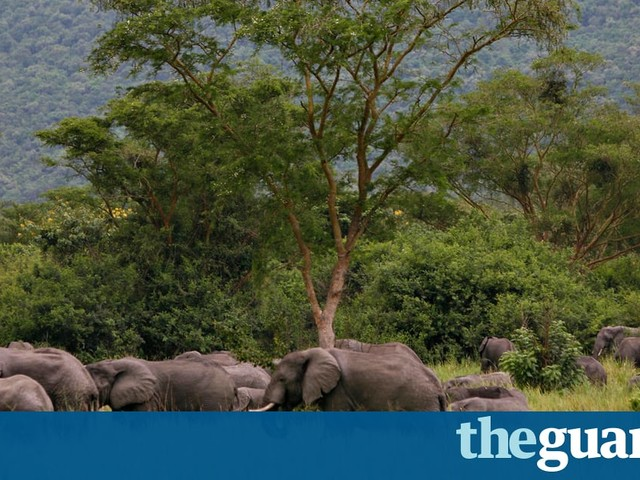 Three wildlife rangers killed in attack by violent militia in DRC