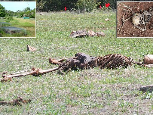 Gruesome images show the inside of a Texas body farm
