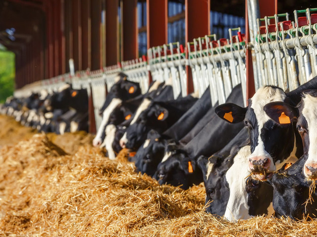 Cutting Meat And Dairy Is The 'Single Biggest Way' You Can Help Save The Planet