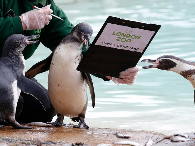 The rising price of going to zoos and gardens pushed up UK inflation at the start of 2018