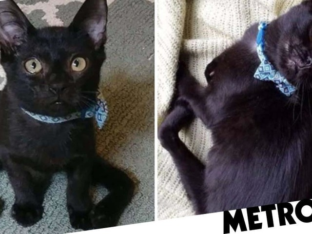 Kitten's twisted legs make him look like a spider