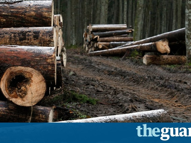 Illegal logging, Autumn budget key points, and consumer waste – green news roundup
