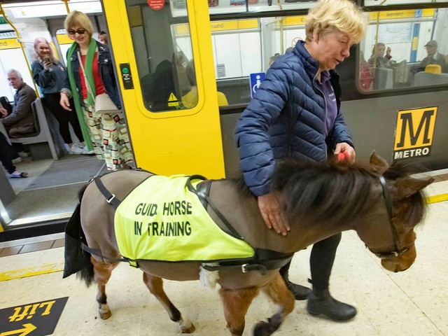 UK's first guide horse prepares for job by taking the Metro
