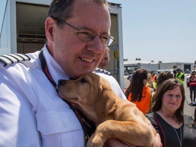 Hurricane Harvey: Rescue Cats And Dogs Flown Out Of Houston To Save Them From Euthanasia