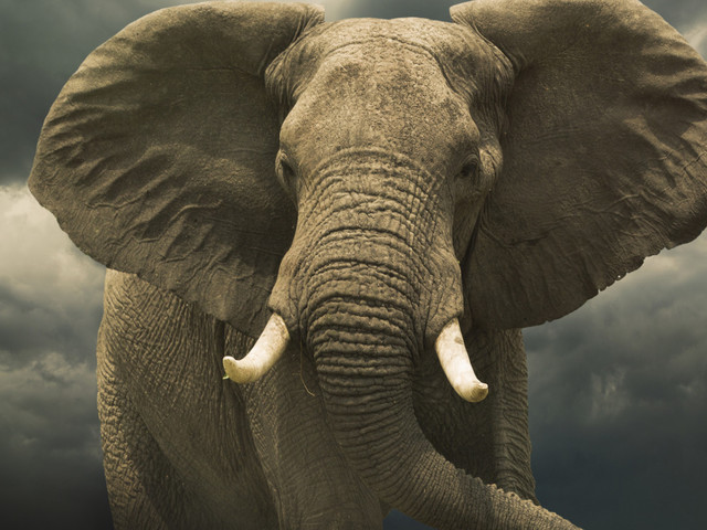 Beyond World Elephant Day: Make Your Voice Heard To Protect These Magnificent Animals