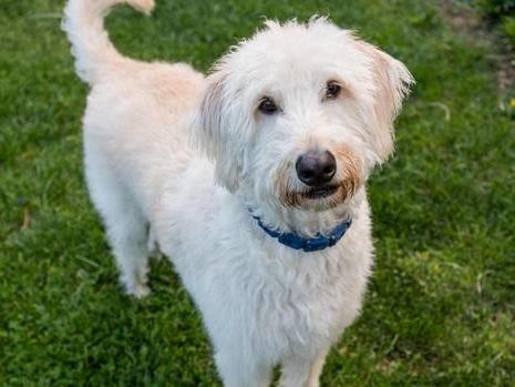 Dog placed on wrong Westjet flight goes missing in Hamilton