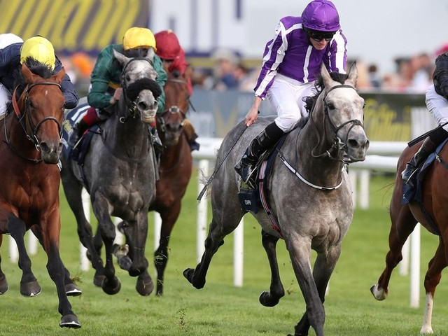 Horse racing tips: Best bets and nap selections for Tuesday January 23