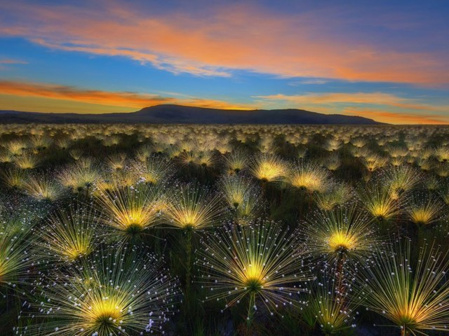 Take a break and check out these International Garden Photographer of the Year pics
