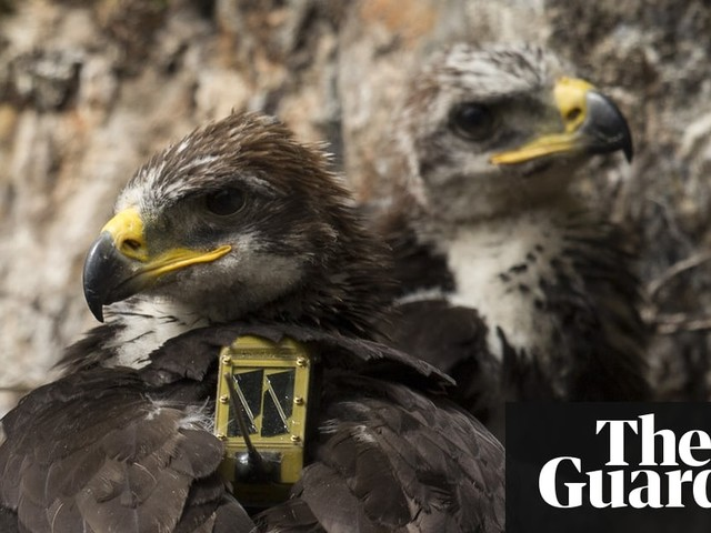 Golden eagle suspected of being killed and dumped at sea near Edinburgh