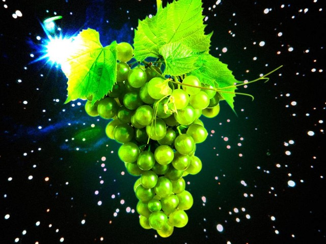 Scientists are growing grapes in space to save Earth's wine supply