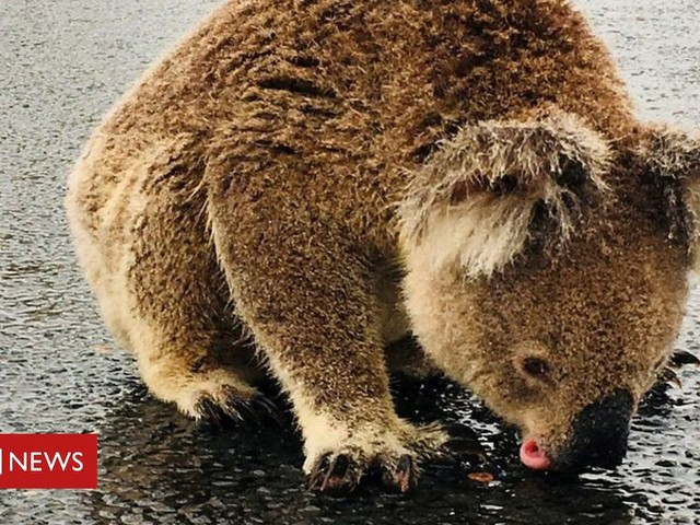 Rain brings bushfire relief to parts of Australia