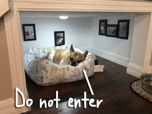 This French Bulldog Enjoying His ~Very Own~ Bedroom Is More Luxurious Than You'll Ever Be