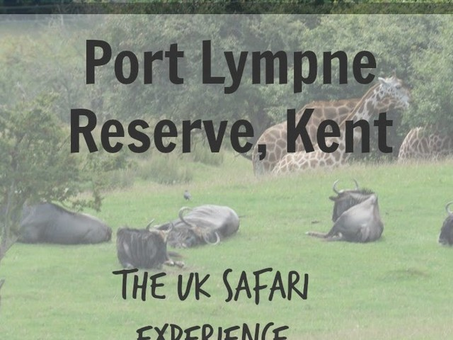 Take a Safari Experience in Kent with Port Lympne Reserve