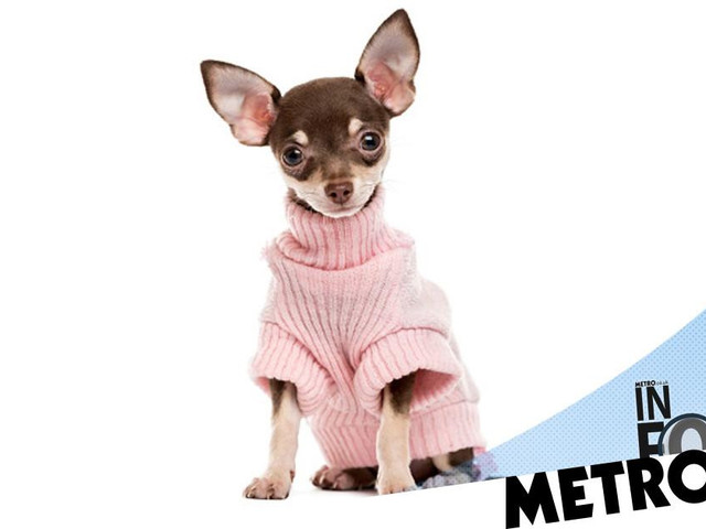 Why are there more clothing lines for dogs than people with disabilities?