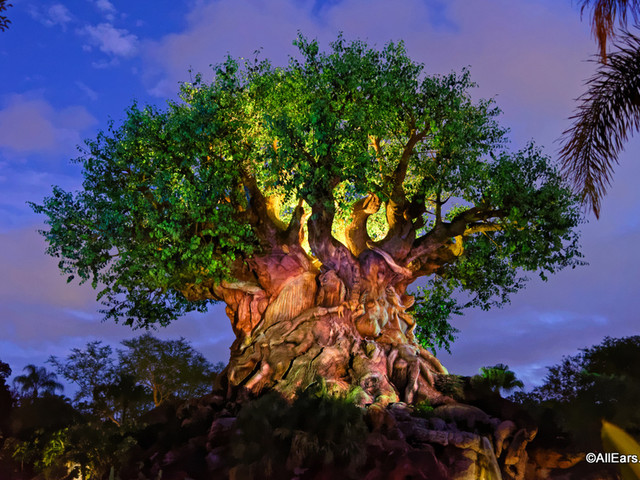 5 Things You're Forgetting About at Disney's Animal Kingdom
