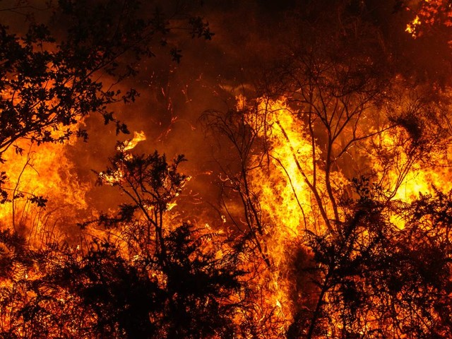 Why the Amazon's vast wildfires are really bad news for the planet