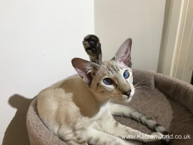 Freya: Hello World! I am the new cat