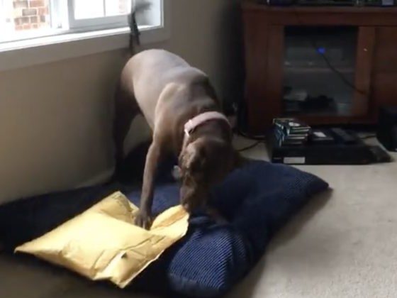 You Know How Happy You Are When You Get A Package In The Mail? This Dog Gets It