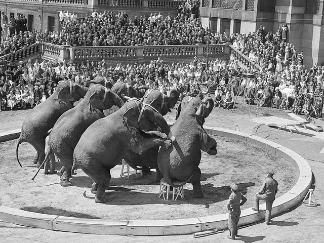 The rise and fall of the 'Greatest Show on Earth' and the Ringling family's circus empire