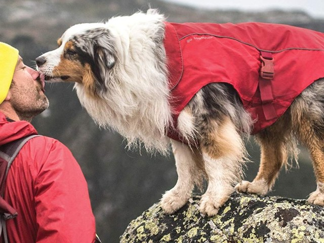 Everything you need for a day of hiking with your dog — all on Amazon and under $50
