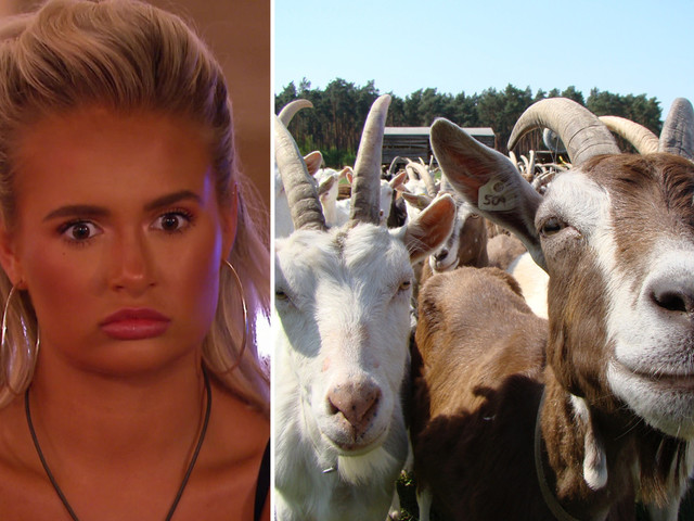 Love Island villa invaded by hungry goats who smashed walls and ate plants after rampaging down from the mountains