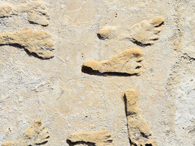 Oldest fossil footprints in North America are teaching us about early humans - CNET
