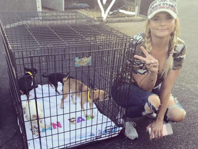 Miranda Lambert Has Rescued Over A Hundred Dogs From Her Hurricane-Ravaged Home State Of Texas!