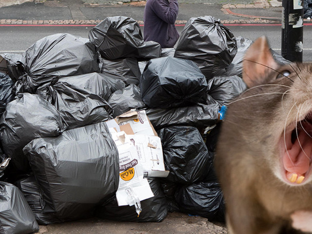 Birmingham Bin Strike: City Under Siege As Residents Fear Rise In Numbers Of Rodents