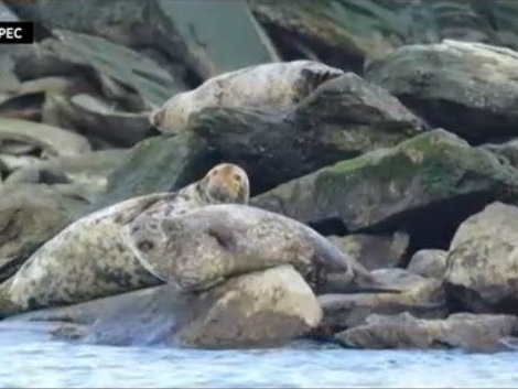 Local Researchers On A Mission To Document All The Seals Living In The Waters Off New York City