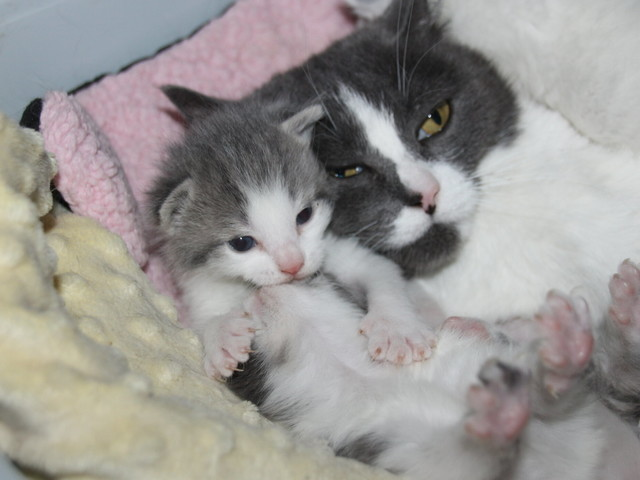 Introducing a Kitten to a Cat