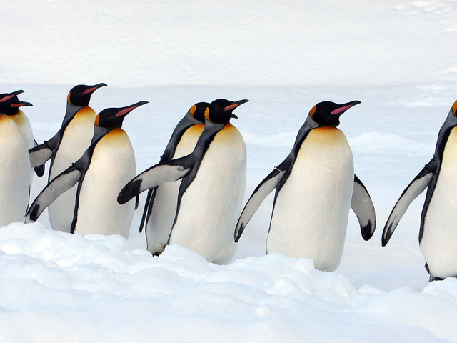 Zoo workers warned after penguin poo discovery