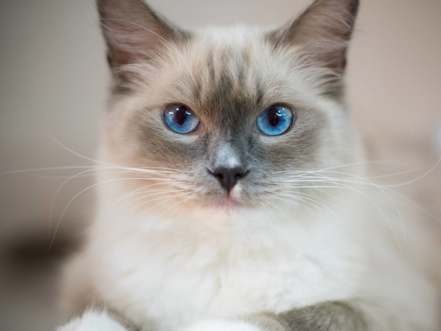 Purrsday Poetry: Ava