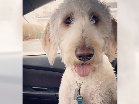 Search on for dog in Ontario after it was placed on wrong Westjet flight