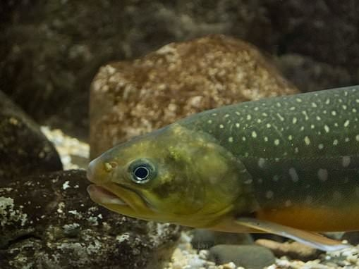 Scientists can now tell what fish live in lakes and rivers by simply testing DNA in the water