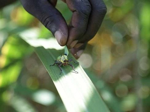 Uganda: Govt Secures Aircraft to Fight Desert Locusts