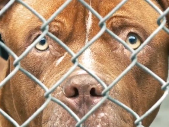 The Horrible Super Bowl Ad This Guy Wants To Air Will Make Animal Lovers So Angry