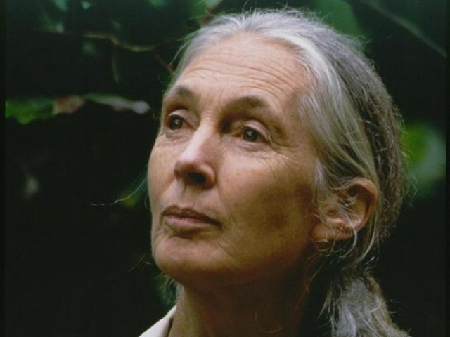 Jane Goodall Speaks Climate Change Action At Global Citizen Festival