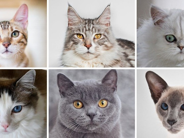 International Cat Day: What your favourite cat says about you