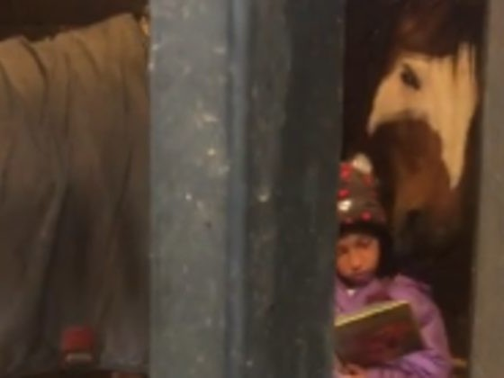 Every Morning, This Girl And Her Giant Four-Legged Buddy Have Storytime