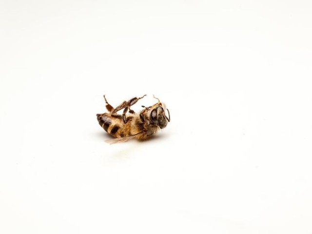 Do Neonics Hurt Bees? Researchers and the Media Say Yes. The Data Do Not.