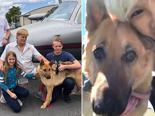 Dog stolen from Florida home as a puppy two years ago found alive and reunited with her family