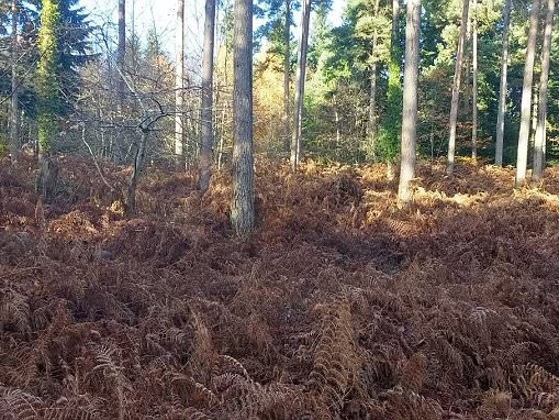 Viral Facebook photo of dog hidden among the ferns